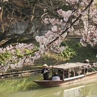 【春爛漫!桜旅】《1700本の桜並木》や《大聖寺川の流し舟》で加賀の桜を愛でる/季節の会席/お食事処