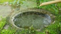 【絶景ステイ☆「特別室」が特別価格】小堀遠州ゆかりの美しい庭園をのぞむ贅沢客室で過ごす