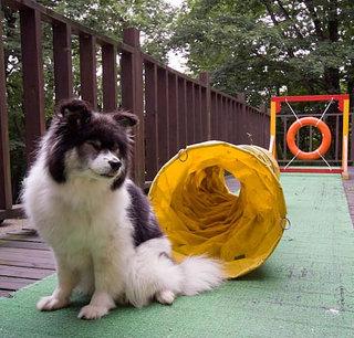 ペットと一緒に貸切温泉露天を楽しもう☆ズワイガニ食べ放題付プラン