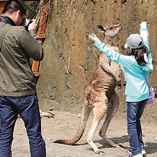 【観光・レジャー】☆長崎バイオパークチケット付き☆かわいい動物たちに直に触れ合える☆素泊まり