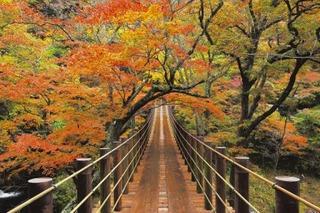 【11月限定】紅葉とアンコウ鍋を楽しもう!秋の大満足プラン!!