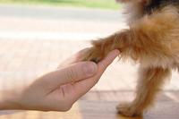 【愛犬と旅時間】『豚しゃぶしゃぶ』和会席膳を堪能♪◆リーズナブル和食会席◆1泊2食
