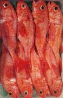 【1泊2食付】絶品!幻の白身魚「のど黒」と、岩塩プレートで焼く霜降り牛ステーキ!贅沢食材を堪能♪