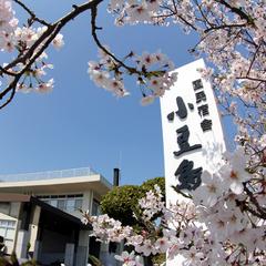 ★桜フェア★春爛漫♪春の島旅を楽しもう♪桜のプチギフト付