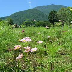 【トレッキング|素泊まり】高原でトレッキング!嬉しい特典付きプラン