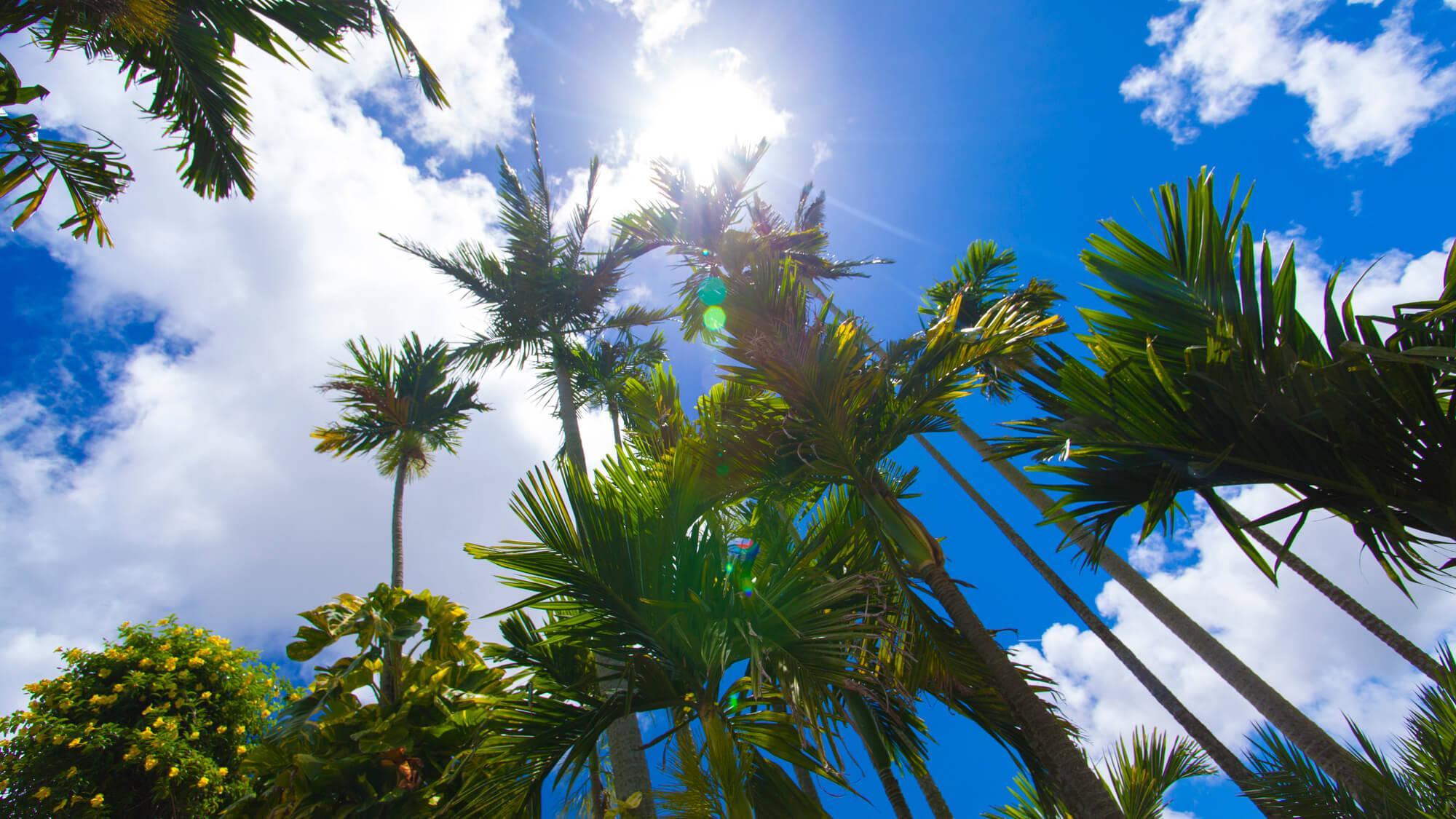 【さき楽60≫≫素泊り】60日前の早期ご予約でお先におトクに沖縄旅行♪
