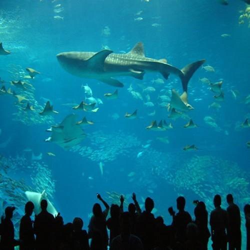【美ら海水族館チケットプレゼント】沖縄の海の中を見てみよう♪感動体験を旅の思い出に☆朝食付