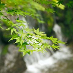 【GWのご予約はこちら】新緑に包まれる爽やかな奥湯河原「山翠楼」で過ごす休日<4/28〜5/5>