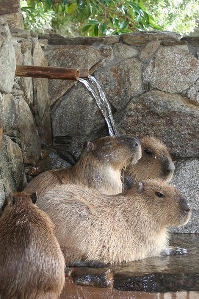 動物と触れ合いたいっ!バイオパーク入場券付プラン