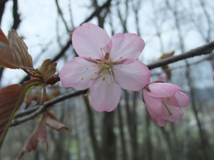 《4月5月宿泊限定》◎2食付◎GW特別プラン♪ 特典は朝採りグリーンアスパラのお土産です♪