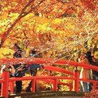 秋の紅葉&グルメ【牛すき焼き・松茸土瓶蒸し】河鹿橋紅葉まで徒歩10分
