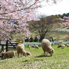 <4月は桜のお花見旅行>◆春の謝恩プラン◆梅酒ほか選べるワンドリンク付