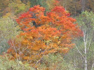 【ポイント5倍】 秋の味覚と紅葉を訪ねる旅♪