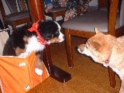 【お先でスノ。】【当館一番人気!】ペットと一緒に宿泊プラン【1泊2食付】