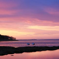 【2食付】白鳥の飛来地&野鳥の楽園、風蓮湖からスグ!木の温もりを感じるログコテージでのんびり♪