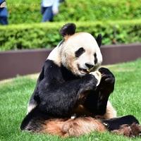 パンダに会いに!【アドベンチャーワールド1日入園券付】ぬいぐるみ特典付/華会席