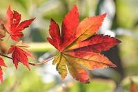 秋の癒しはお手軽に ♪ 素泊りプラン【現金特価】