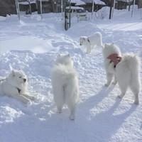 【年末年始!ペット同宿/軽朝食付】大自然のアクティビティーも充実!Akabekoで過ごすお正月