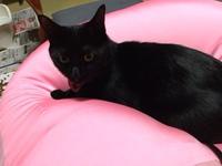 当館一番人気!猫ンパニオン 温泉であったか猫ももふもふプラン