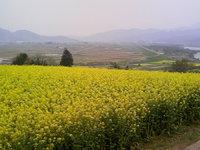新緑と花の高原で山菜料理と富倉蕎麦を味わう