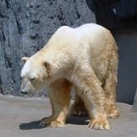 【旭山動物園入園券付】<ル・マッターホルン>大人も子供も楽しめる旭川観光定番スポットで遊ぼう