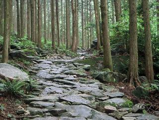 【思い立ったら一人旅プラン】伊勢から熊野へ★露天風呂付き客室で美し国「三重県」を満喫!