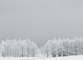 リフト割引券付、スキー&スノボ2食付(フレンチディナー)+貸切温泉ジャグジー利用【お先でスノ。】
