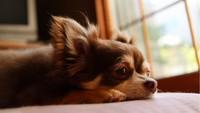 【春夏旅セール】愛犬と一緒∪・ω・∪!10%オフ&Pt10倍♪さらに愛犬無料<▼カジュアル/部屋食>