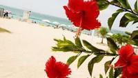 自然の中で海を見ながらバーベキュー![ビーチパーティーで沖縄体験]【お手軽BBQコース】