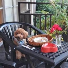 ペットと一緒♪ドッグランで遊んでガーデンスパで満喫プラン