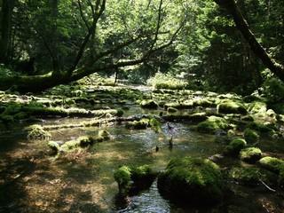 世界自然遺産の宿 しれとこ村