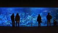 【ファミリー】動物たちとふれあえる水族館♪「うみたまご」チケット付プラン(食事なし)