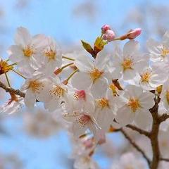 ◆吉村屋春の旬菜膳会席プラン 《春のお野菜と山菜を》