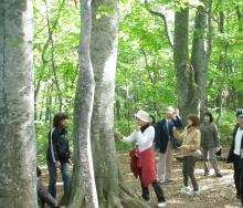 【ご宿泊日に散策】☆白神ハイキング♪ 白神の森遊山道散策コース☆