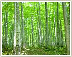 【曜日限定】★ご宿泊翌日に散策★ノルディックウォーク!白神の森遊山道散策コース宿泊プラン!