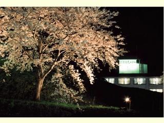 【GW日程限定】今が春本番!まだ間に合います!北前料理と上質温泉!日本海一望の宿【現金特価】