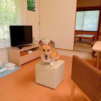 ワンコ同宿和洋室 キッチンなし(御蔵島4〜6号)