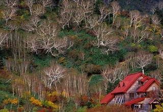 雲上の空中散歩 栂池自然園へ!〜栂池自然園のトレッキングチケットの付いた宿泊プラン