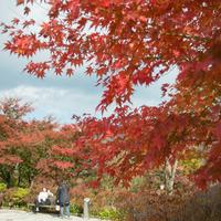 【秋冬旅セール】秋冬の箱根旅を応援!人気のスタンダードプランが5%OFF<1泊2食付き>