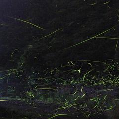 【ホタル観賞ナイトツアー】6/7〜7/8限定!初夏の風物詩・ホタル★観賞スポットまで送迎付♪