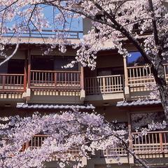 【春の訪れ】目の前に桜が広がるお部屋をご用意します♪「お部屋でお花見プラン」