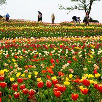 【期間限定】フラワーワールド入園券付☆季節の花々を楽しむ♪