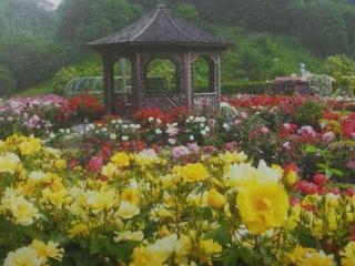 東濃温泉でゆったり♪バラ園で観光にアウトレットも東濃満喫!