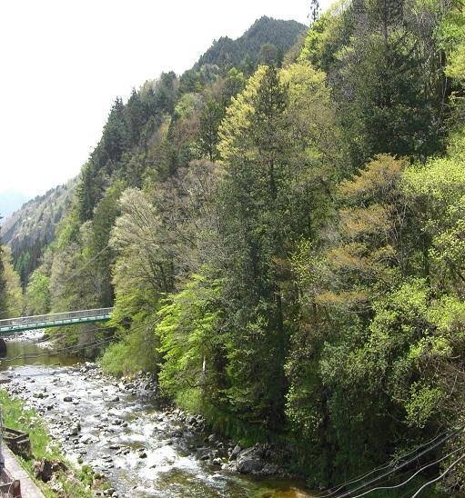 湯屋温泉 炭酸泉の宿 泉岳舘 関連画像 4枚目 楽天トラベル提供