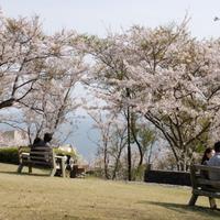 【先着2組様限定x貸切風呂】一面の桜と碧い海のコラボ☆絶景のオーシャンビューを貸切風呂から満喫♪
