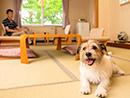 愛犬と温泉旅行♪夕食は和食会席梅コースとハーフバイキング