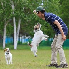 【愛犬と温泉旅行♪】夕食はワンランク上の竹膳〜源泉掛け流し美白の湯を堪能!