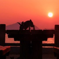 ウサギの島でスペシャル滞在プラン(5泊)