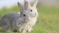 【ひろしま二人旅】ウサギ島で宿泊♪』Kunoshima‐ビュッフェ【基本プラン】