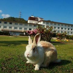 ウサギの島でスタンダ−ド滞在プラン(4泊)